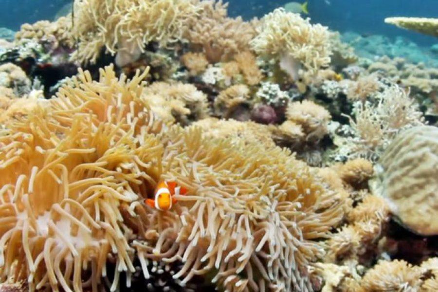 Top 7 sesiuni perfecte de scufundări