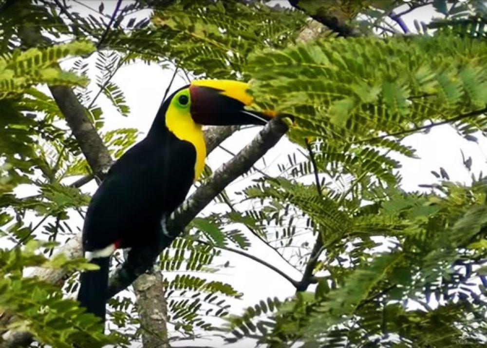 Costa Rica – pentru iubitorii de aventură