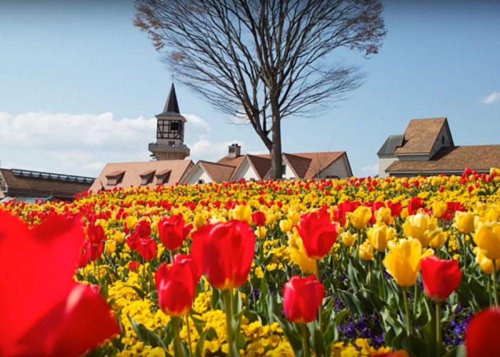 Olanda – Călătorie pe Drumul Florilor