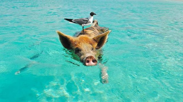 5 Călătorii Adorabile – Înotând cu Animalele