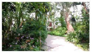 botanical garden 1001