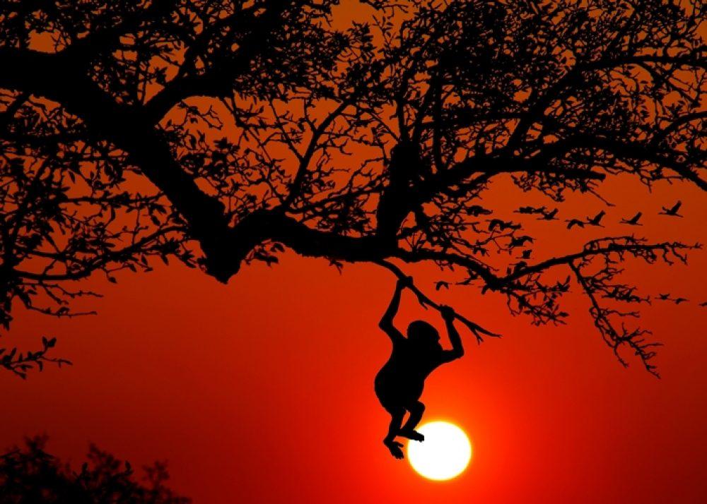 Top 3 Destinații de Vacanță – Jungle & Păduri Tropicale