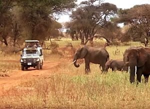 elephan
